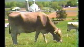 SONGS OF THE VEDAS AND SCENES FROM THE SANCTUARY : COWS MILK
