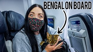 FLYING WITH A BENGAL CAT IN CABIN...   Also during COVID PANDEMIC