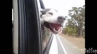 собаки смотрят в окно