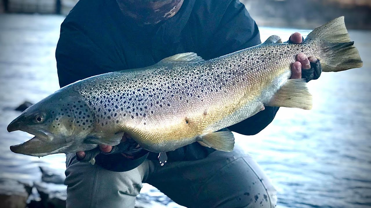 MY BIGGEST BROWN of 2020 - Bottom Bouncing for Lake Ontario Brown Trout