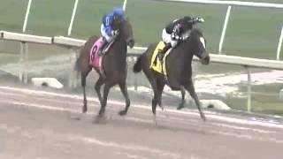 Dare To Dream Stable Horse Racing Partnerships SKIRTS ON FIRE wins on 1-17-16