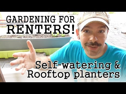 urban-gardening-tips-for-renters:-self-watering-containers-/-rooftop-terraces-/-community-gardens