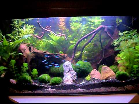 mein 54l aquarium youtube. Black Bedroom Furniture Sets. Home Design Ideas