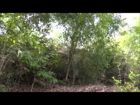 chitrapur jungle