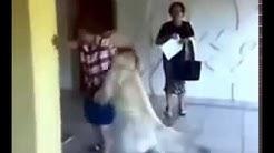 Ein hund fickt eine Frau