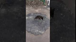 В Николаеве провалился асфальт на месте, где недавно проводили «ямочный ремонт»