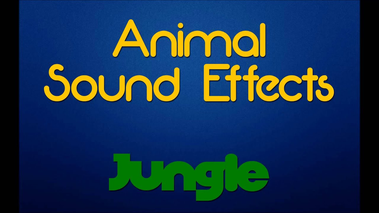 Large wild animal best blog: Sounds of wild animals mp3