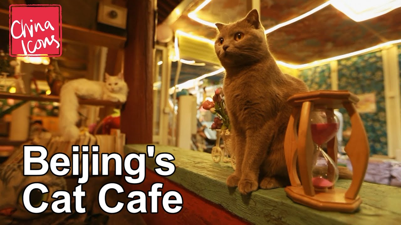 Beijing Cat Cafe