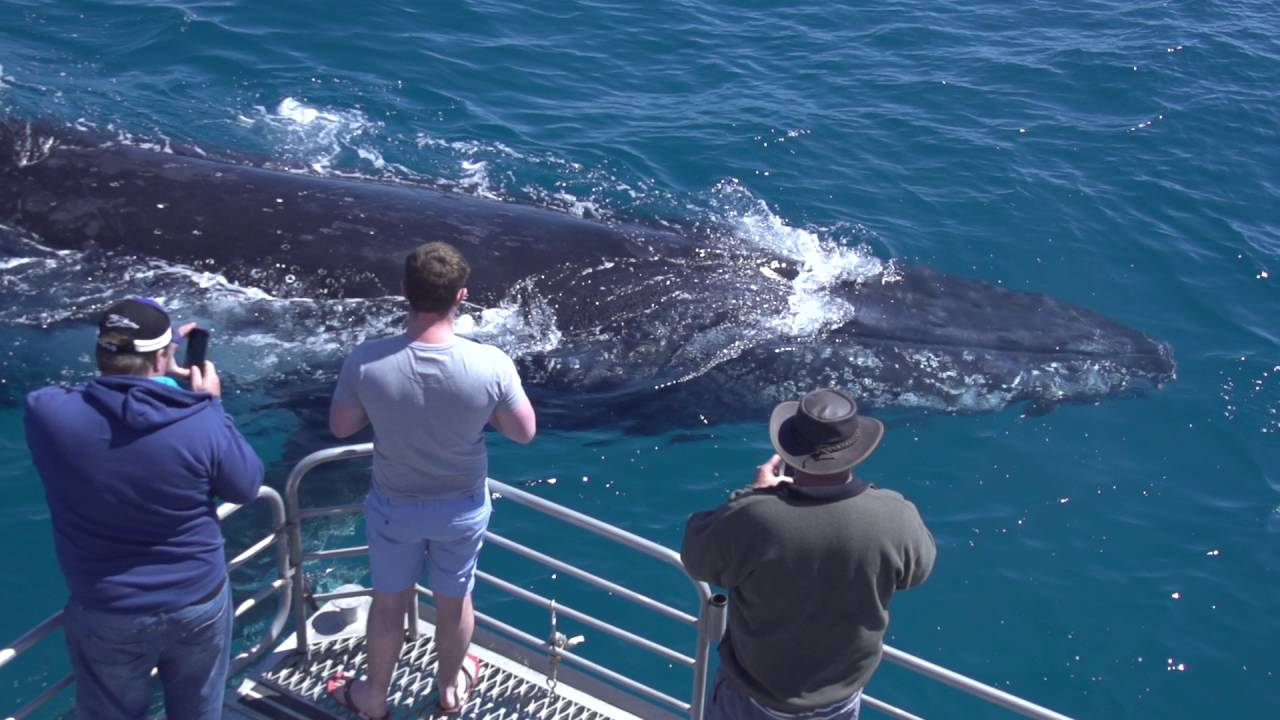 video Half Day Whale Watching Encounter