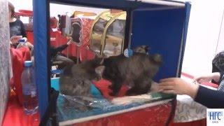 """Выставка кошек """"Кошачий Ля'Мурр"""" в Омске"""