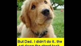 About Golden Retriever | About Golden Retriever Puppies