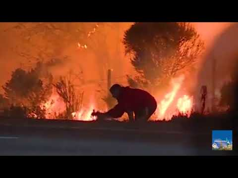 Man rescues rabbit amidst intensifying flames from LA wildfire : Animal lover : Anonymous hero