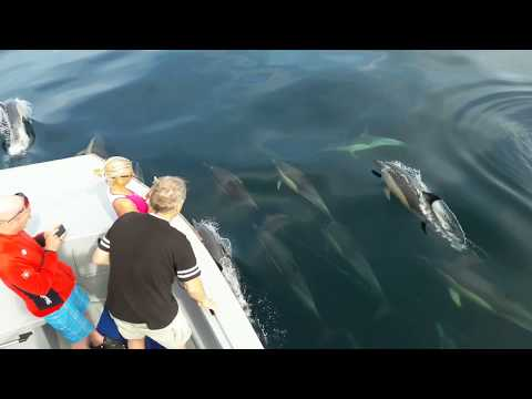 Dolphin Sighting with Raggy Charters - Port Elizabeth