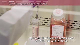Plasmid DNA Transfection Protocol - 한국어