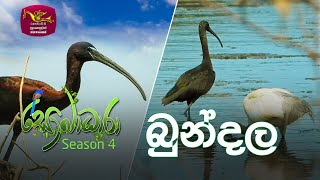 Sobadhara - Sri Lanka Wildlife Documentary | 2020-06-19 | Bundala ( බුන්දල ) Thumbnail