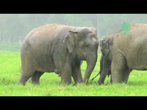 Coe Lewis - Elephants Excited To See The Rain