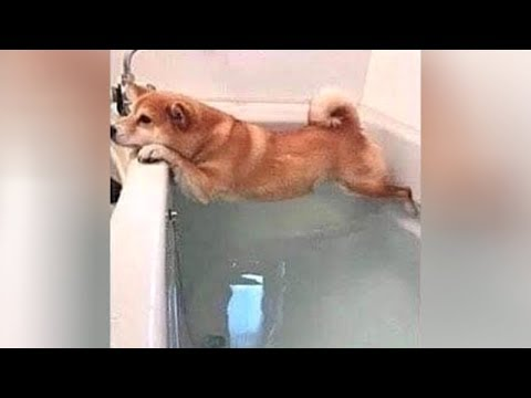 Bet you'll LAUGH LIKE HELL! - Ultra FUNNY ANIMALS & PETS videos