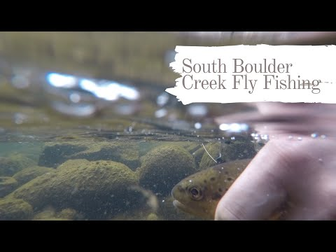 Low Flows But Big Appetites. Epic Day Of Fly Fishing On South Boulder Creek - March 2020
