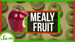 What Makes Fruit Mealy?
