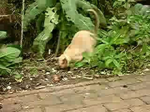 Cat digging the garden
