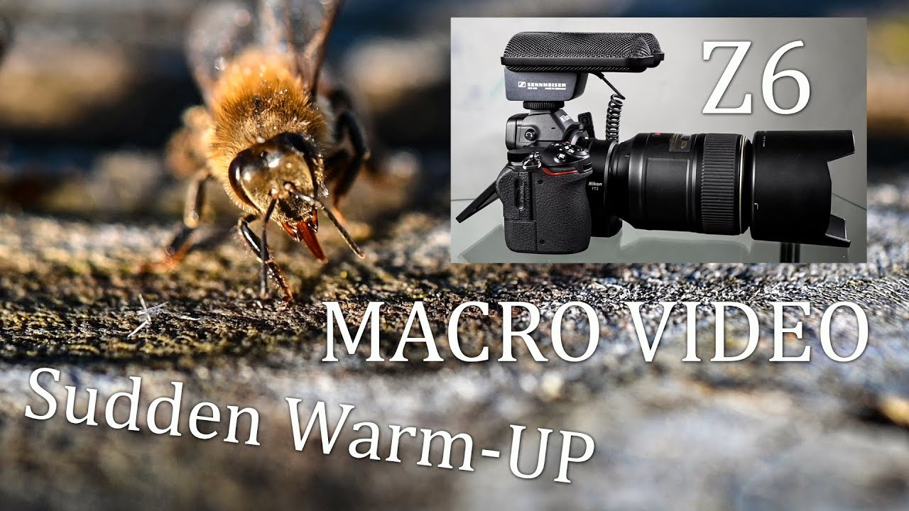 Temperatures Rise Honey Bees Fly Nikon Z6 Casually Tested w Nikon AF S  Micro Lens