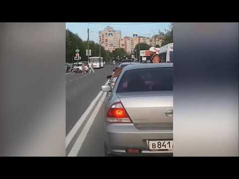 Сбежавший в Иваново тигр