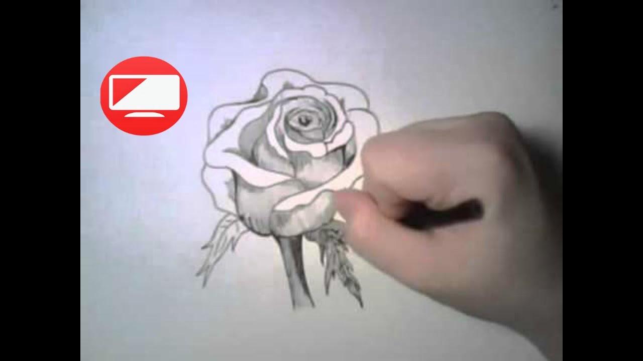 Como dibujar una rosa paso a paso a lapiz how to draw a - Como secar una rosa ...