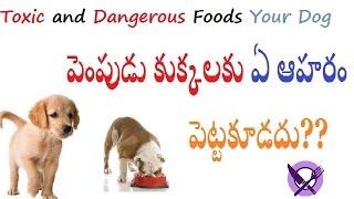 Foods dangerous to dogs Telugu   పెంపుడు కుక్కలకు ఏ ఆహరం పెట్టకూడదు   What Foods Are Toxic for Dogs