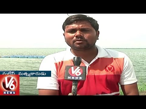 Telangana Government Start Cage Culture Fish Farming In Singur Project | V6 News