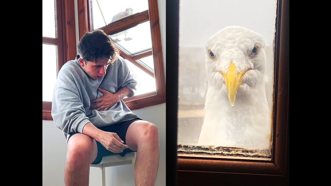 Can My Pet Seagull Predict The Day I Will Die?