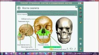 Скелет человека. ЕГЭ. ОГЭ. Биология.
