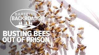 Learn how to rescue honey bees | Bartell's Backroads.mp3