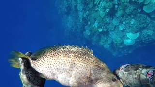 Townsville Spearfishing 2017