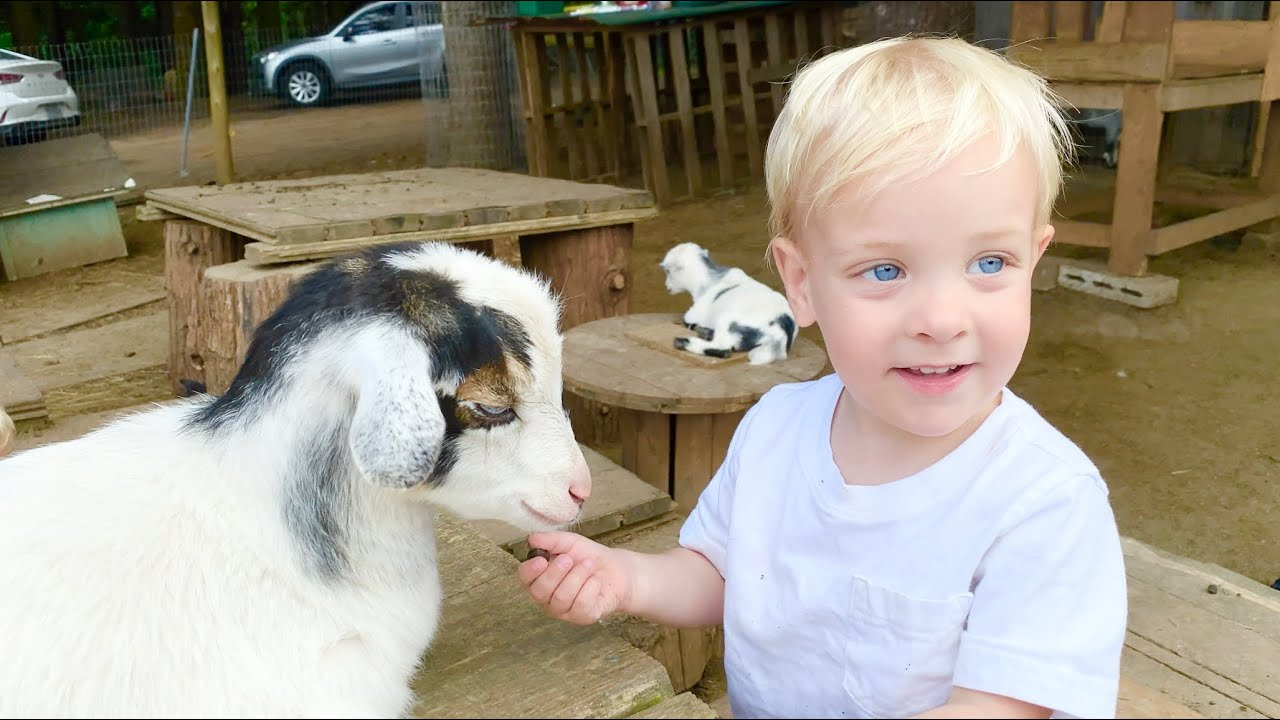 Toddlers Explore Huge Goat Farm - Don't Eat The Grapes - Cuteness