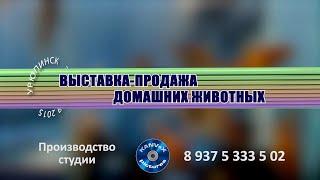 Урюпинск Выставка-продажа домашних животных 3.10.2015(, 2015-10-05T21:23:30.000Z)