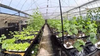 Soil Free AutoPot Agriculture