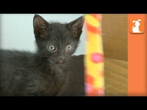 Kitten Wants To Touch String - Kitten Love