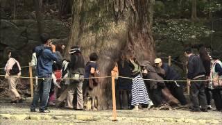 映画『神宮希林 わたしの神様』予告編 thumbnail