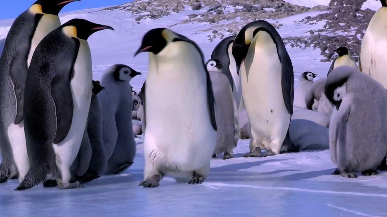 הפספוסים והנפילות הטובים ביותר של הפינגווינים