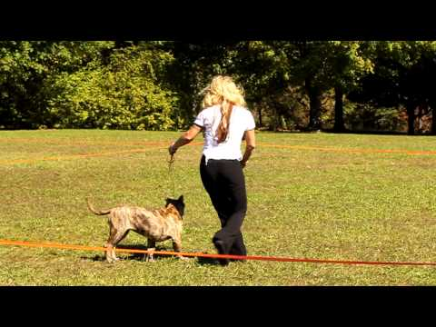 Dog Rescuer describes her first rescue from YouTube · Duration:  2 minutes 55 seconds