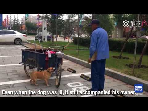 Dog helps man clean streets, collect rubbish