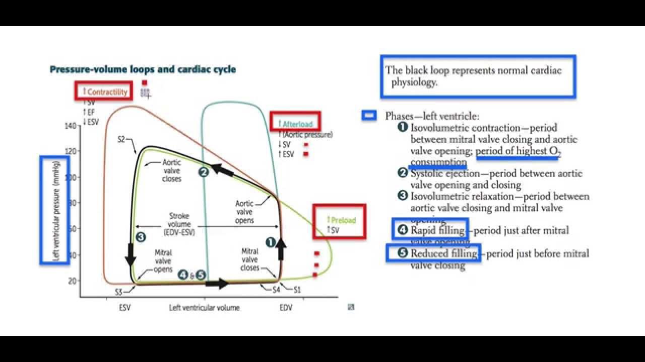 causal loop diagram pv loop diagram pv loop pathology - youtube #9