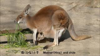 2017/1/7 仙台市八木山動物公園。今年初の訪問で目についたのが、お腹か...