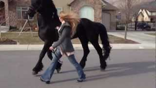 Going for a stroll with my Friesian Stallion, Apollo! :) thumbnail