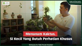 Menanam Kaktus, Si Kecil Yang Butuh Perhatian Khusus