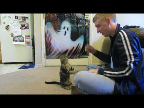 Cat Learns Tricks like a Dog!