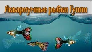 Аквариумные рыбки Гуппи 🐠 🐟