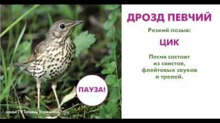 Слушаем голоса дикой природы. Птицы (фильм первый).
