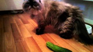 Кошки против огурцов!