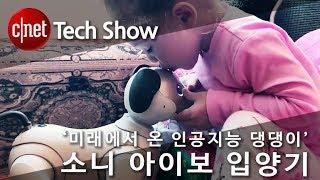 '미래에서 온 인공지능 댕댕이' 소니 아이보 입양기